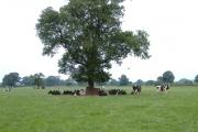Warmingham farmland