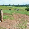 Fields at Waldley