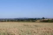 Wheat Field near Stone House Farm