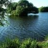 Island, Attenborough Nature Reserve