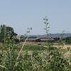 Bryn-y-plentyn from behind the hedge