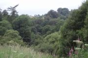 Woodland on west side of Fankerton