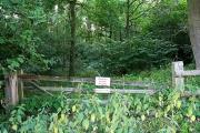 Tangle-Trees Wood