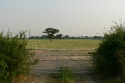 A Gated Field With Tree