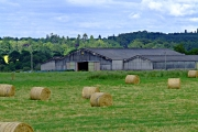 Farmland near Marybank
