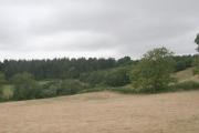 Woodland on Round Hill