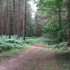Cuckney Hay Wood