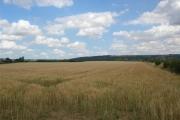 Barley near Gowthorpe