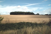 Primrose Wood