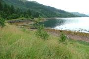 Shoreline on Loch Duich