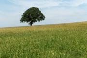 Farmland near Gaitsgill