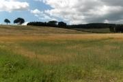 Farmland near Armathwaite