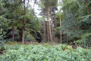 Hollyhurst Wood, Whitchurch