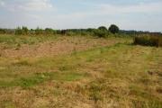 Scrappy land, Upton Court