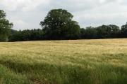 Farmland between Gaitsgill and Dalston