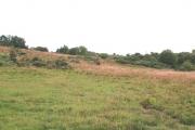 Rossie Moor