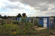Allotments in Walsham-le-Willows