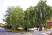 Willows in Walsham-le-Willows