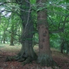 """Bunting Wood - """"To death do us part"""""""