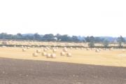 Straw bales, Piggotts Farm