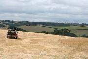 Sandford: wheat field