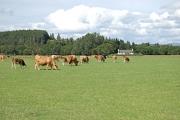 North Clachaig