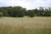 Meadow and woodland, near Crowhurst, Surrey