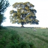 Tree just above Pontypool Park