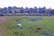 Barrow - River Gowy near Holme Farm, Plemstall