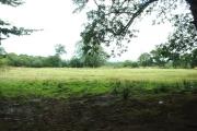 Farmland near Plas-ym-mhenrhos