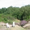 Quarry on Firestone Hill