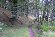 Backside Wood