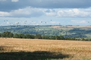Stockland: by Ridge Cross