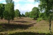 Semi Open Woodland Near Kinveachy