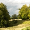 Trees on the downs above Lockinge