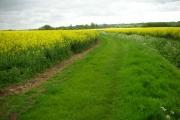 Oil seed rape and farm track