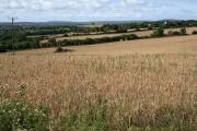 Cereal Cropland