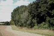 Bog Wood, Maldon