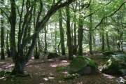 Higher Hill Wood