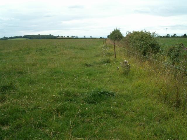 Fields near Ashcott
