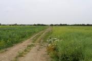 Flat farmland in Grunty Fen, Cambs