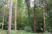Sheraleers Wood