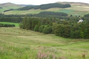 Grazing land, Tweeddale.