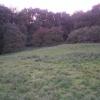 Norcombe Wood