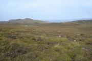 View towards Meall nan Meallan
