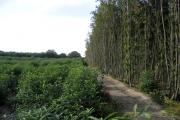 Sweet chestnut coppice, Hurst Wood, West Peckham, Kent