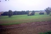 Woods near Willow Farm