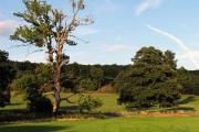 Farmland at Mapledurham