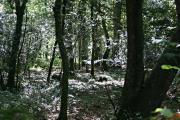 Paramoor Woods