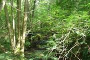 Stream Under Stonehurst Hanger